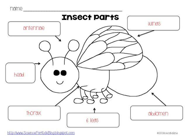 Preschool Worksheets On Insects 4
