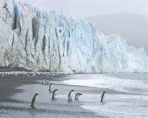 pinguinos en polo sur