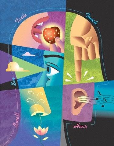 cinco sentidos