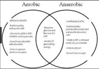 Difference between Aerobic and Anaerobic Exercise