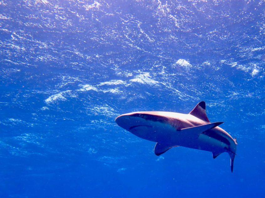 Un mur de requins rien que pour nous !