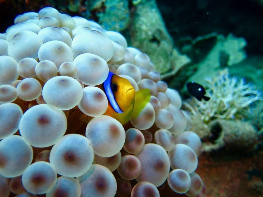 Scuba diving : the focus on speciality accessible from the first level of diving