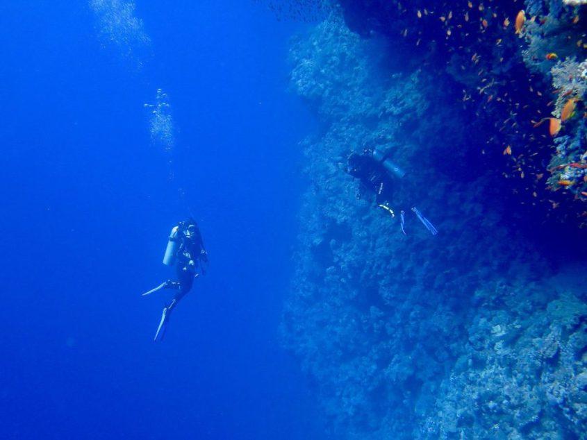 Travailler dans le monde de la plongée: le Divemaster
