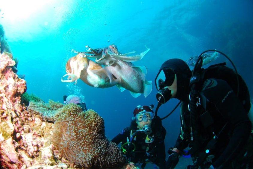 Des plongeurs partis plonger en couple observe une seiche