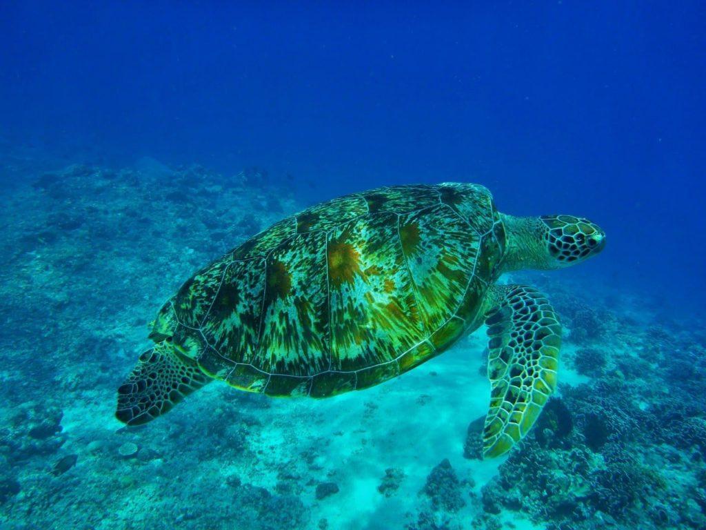 Une jolie tortue de mer