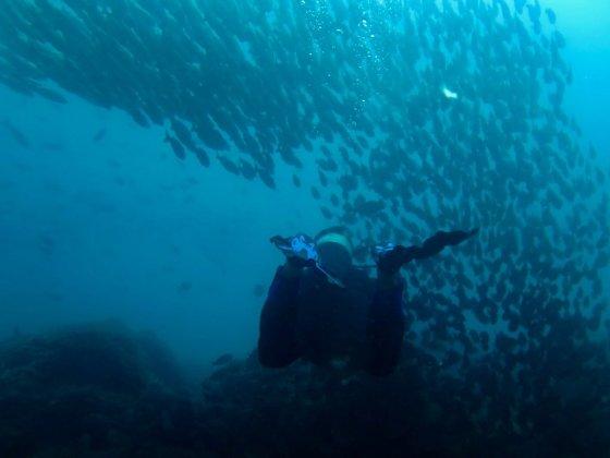 Un plongeur entre dans un mur de poisson