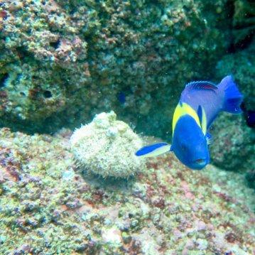 Un poisson lors d'une plongée au Costa Rica