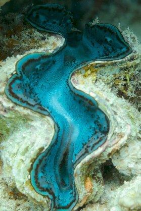 Photo d'un bénitier dans les eaux égyptiennes