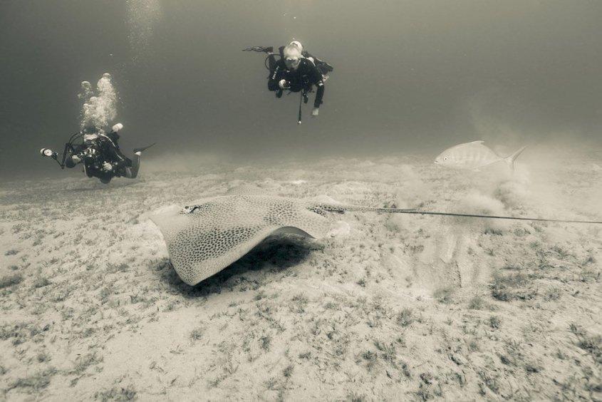 Deux plongeurs derrière une raie