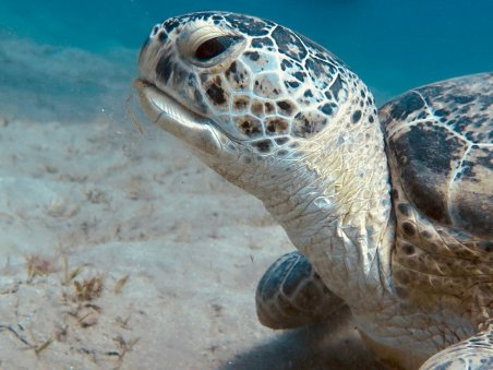 Gros plan sur une tortue