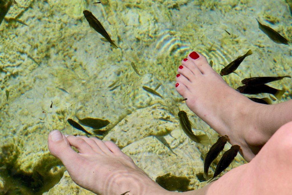 Des poissons viennent manger les petites peaux des pieds des baigneuses