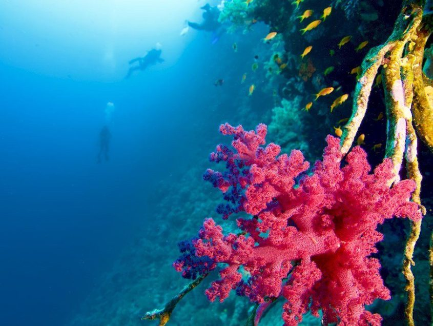Plongée privée sur un des plus beaux sites de Mer Rouge