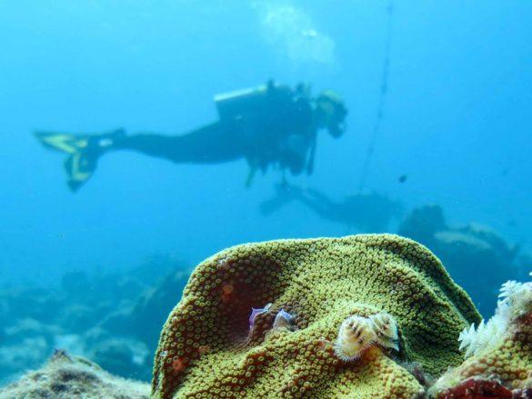 Un plongeur dans les eaux claires de Bonnaire