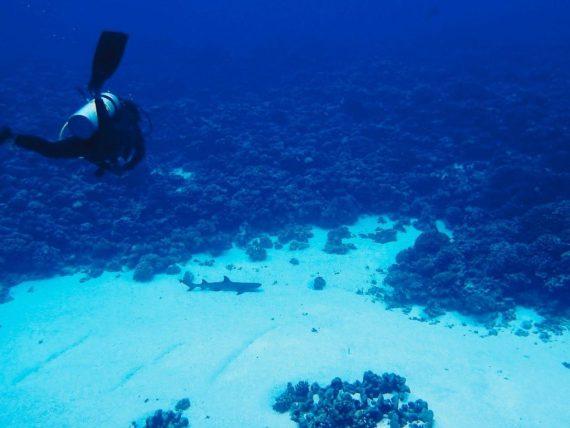 Un plongeur se dirige vers un requin dans la passe de Fakarava où Laurent Ballesta a tourné son film.