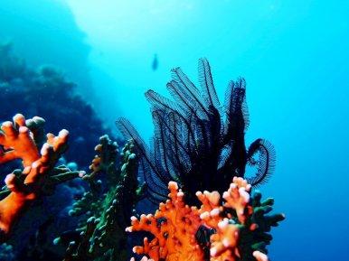 Paysage sous-marin en Egypte