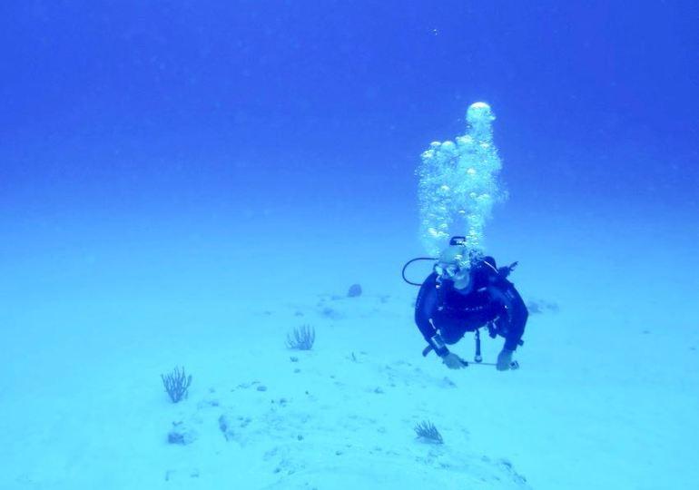 20 essential diver's profiles