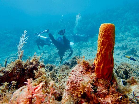 Plonger en Jamaïque : des plongeurs sont dans les fonds marins