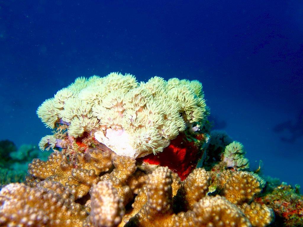 Fond marin de Mayotte