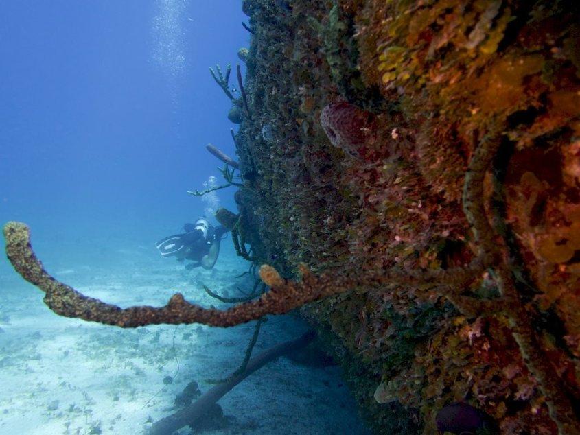 Des plongeurs longent la coque du SS Kathryn