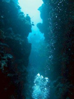Plonger dans la passe en S a Mayotte n'est pas le seul beau spot de l'île : le tombant des aviateurs avec ses canyons est très sympa
