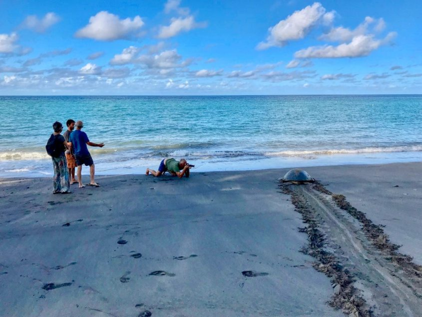 Des personnes observent une tortue qui rejoint la mer sur la plage de N'Gouja avant d'aller plonger avec les tortues à Mayotte