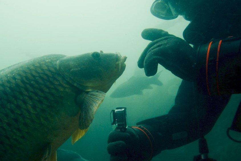 Un plongeur semble converser avec une carpe sous l'eau
