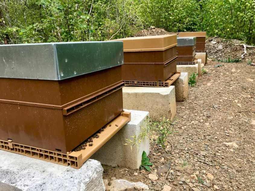 Les ruches de la carrière de Rochefontaine