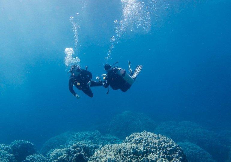 Ces plongeurs qui ne veulent pas passer de niveaux
