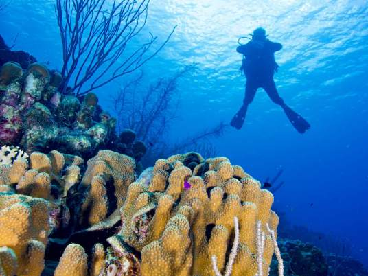 Ambiance sous-marine de Bonaire avec un plongeur