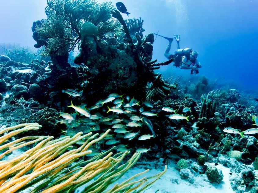 Un fond sous-marin observable en allant plonger à Bonaire