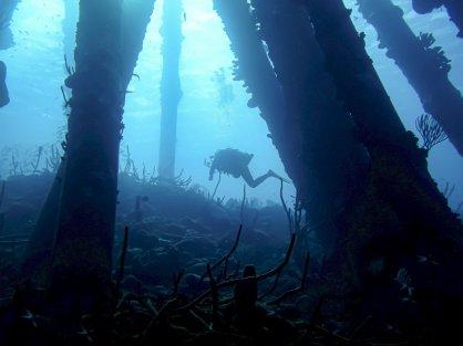 Plonger à Bonaire sur le site de Salt Pier permet d'évoluer dans des ambiances magnifiques