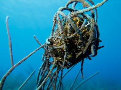 La faune et la flore dans les eaux de Bonaire donnent parfois lieu à des compositions originales.