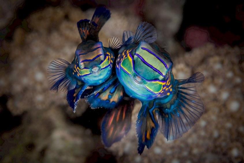 Deux poissons multicolore photographiés par Stéphanie Floirat.