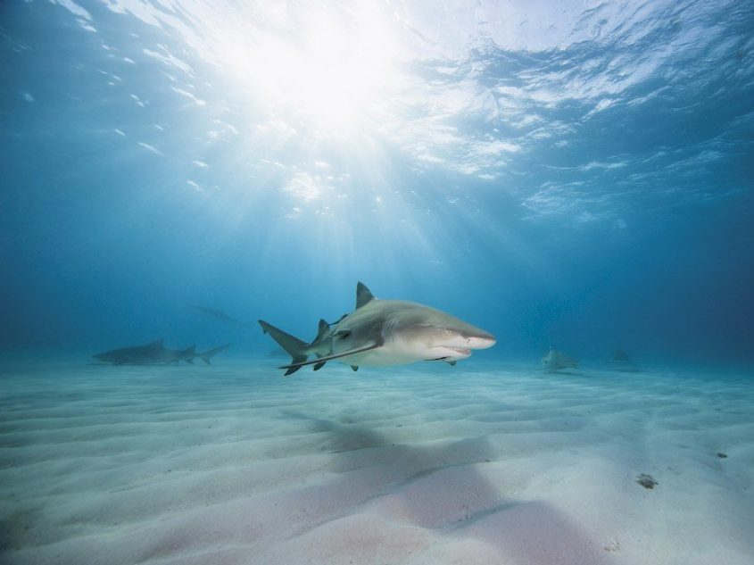 Shark Protection: The initiative that Will Give Us The Power to Act