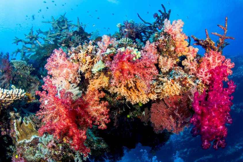 Des coraux colorés dans une eau claire.