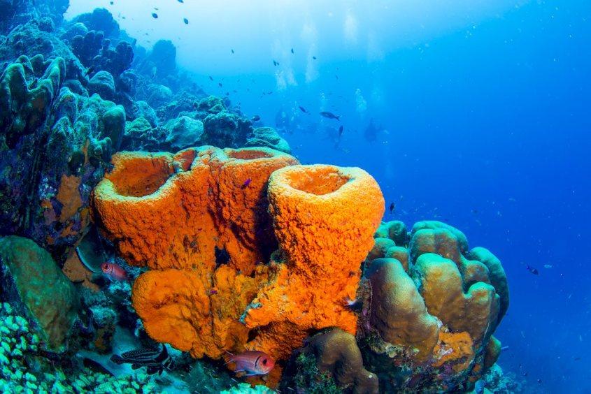 Des coraux oranges avec des plongeurs en fond