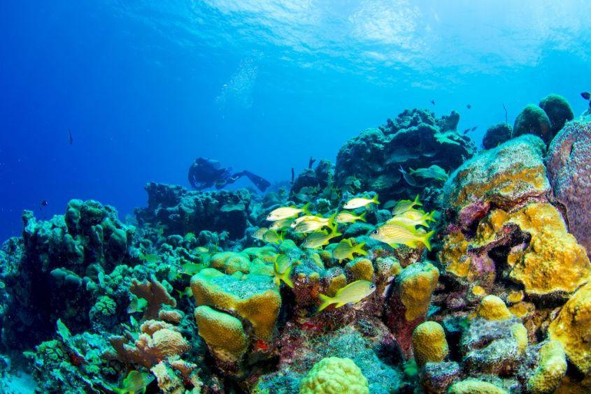 Le récif de corail de Bonaire.