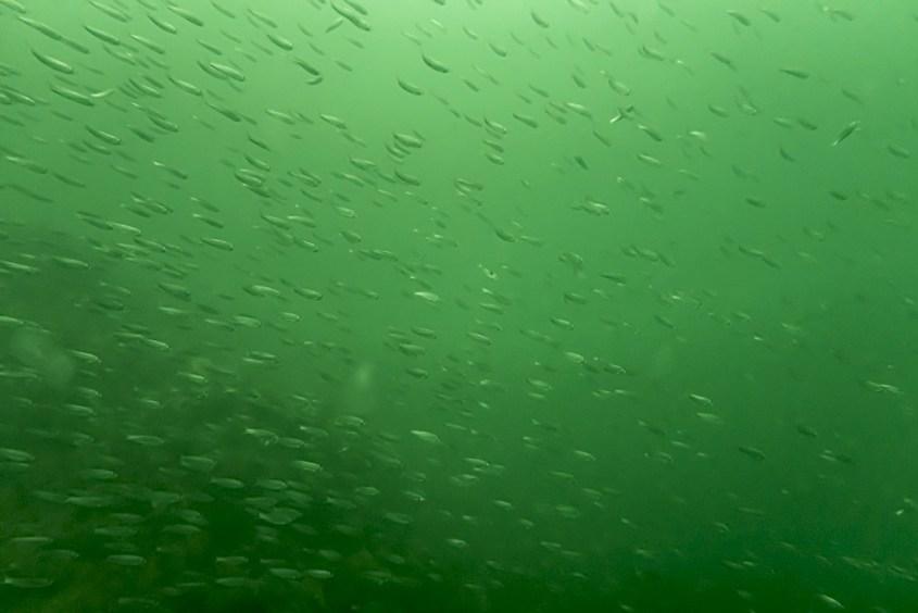 Entourés d'un banc de poissons