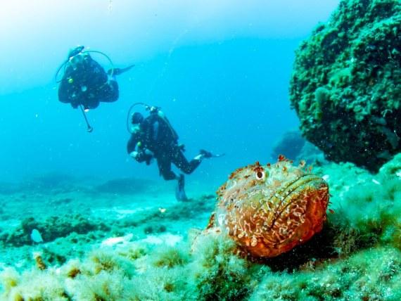 Les nuances de bleu de l'eau sont contrebalancés par les couleurs des animaux marins comme ce poisson pierre à Marseille.