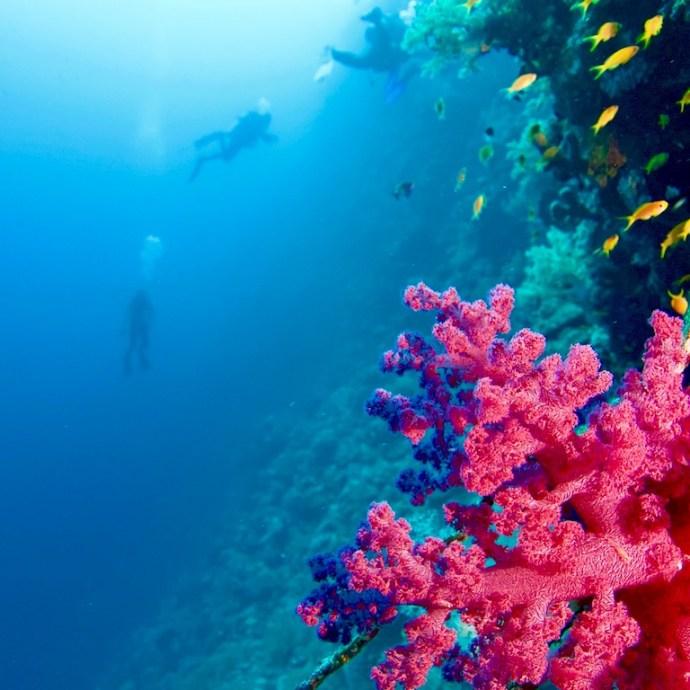 Le tombant d'Elphinstone en Egypte avec des plongeurs.