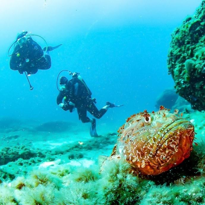 Les spots de Marseille font partie des endroits où la plongée peut se décliner sous différentes nuances de bleu comme ici avec une eau très claire dans laquelle évoluent deux plongeurs.