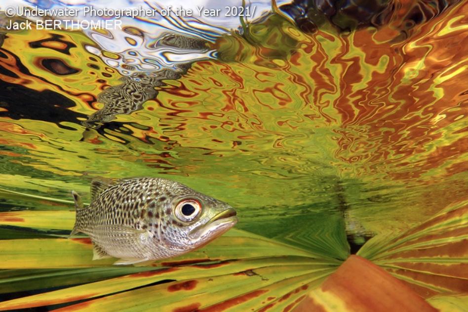 Une carpe dans des algues est le cliché qui remporte le prix de la catégorie compact du concours des plus belles photos sous-marines 2021