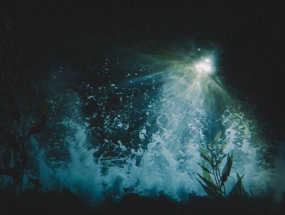 Une plongée de nuit permet de voir les choses vues du dessous avec une vision différente.