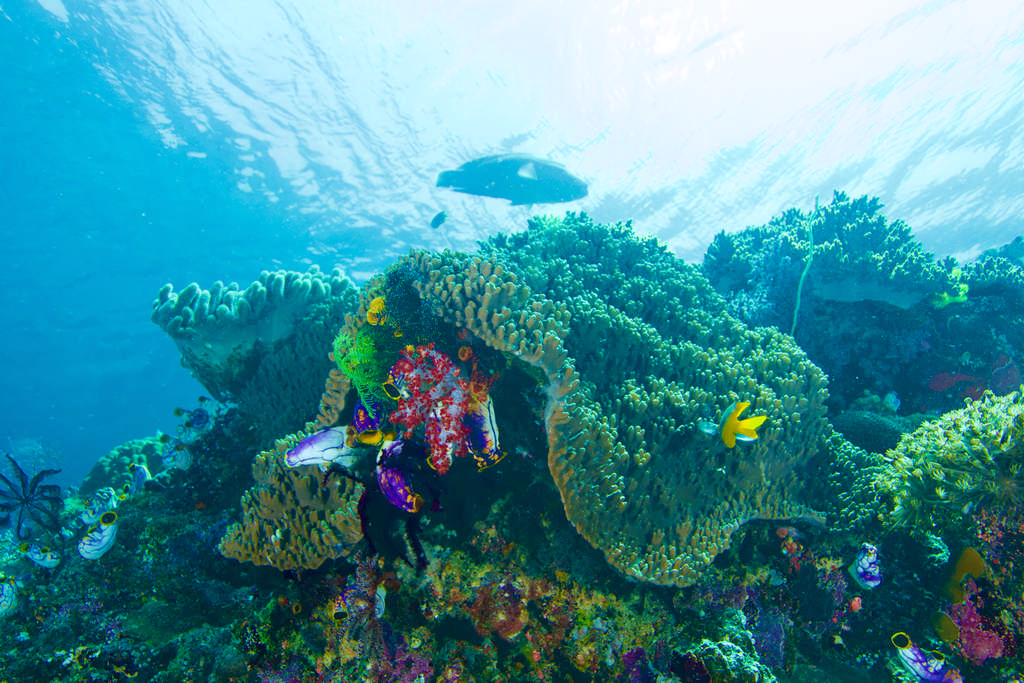 Récif coloré à Raja Ampat.