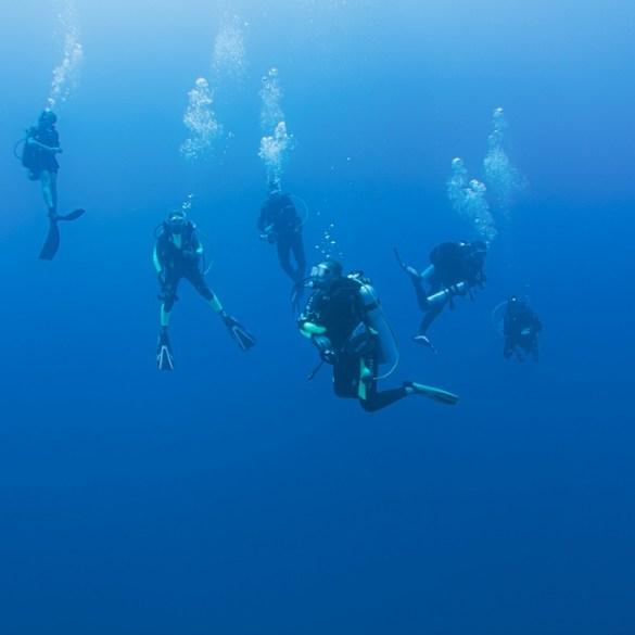 Quelle filière choisir pour débuter la plongée ?