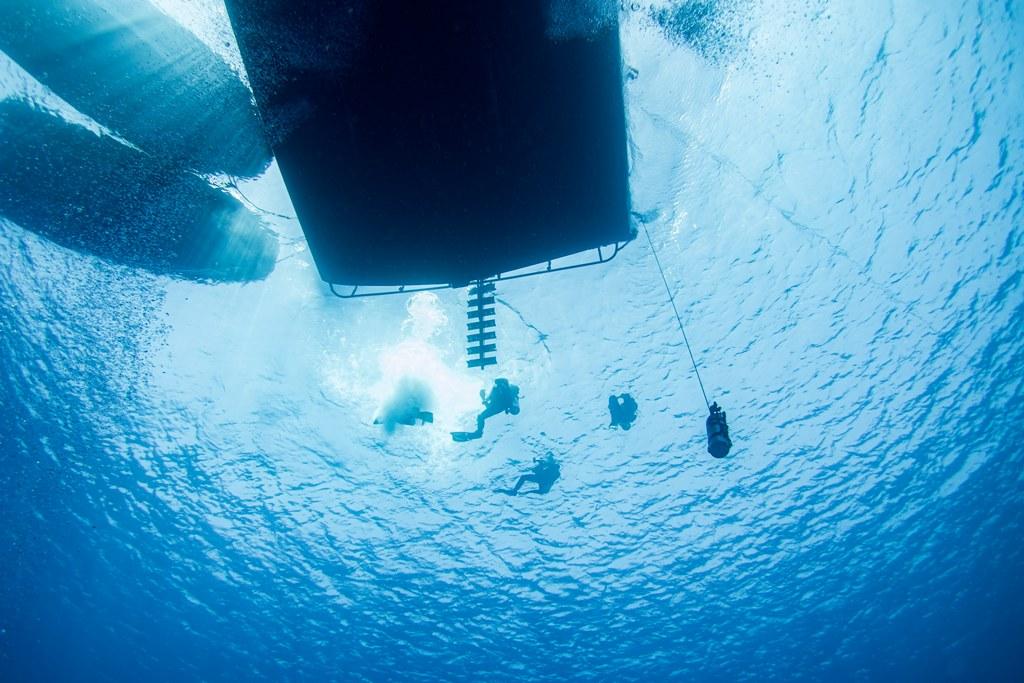 L'exocet vu de dessous lors d'une croisière de plongée en Egypte.