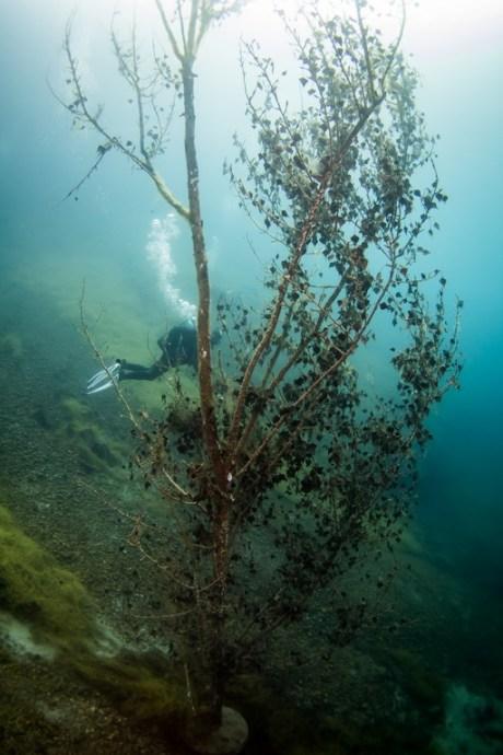 Un plongeur derrière un arbre.