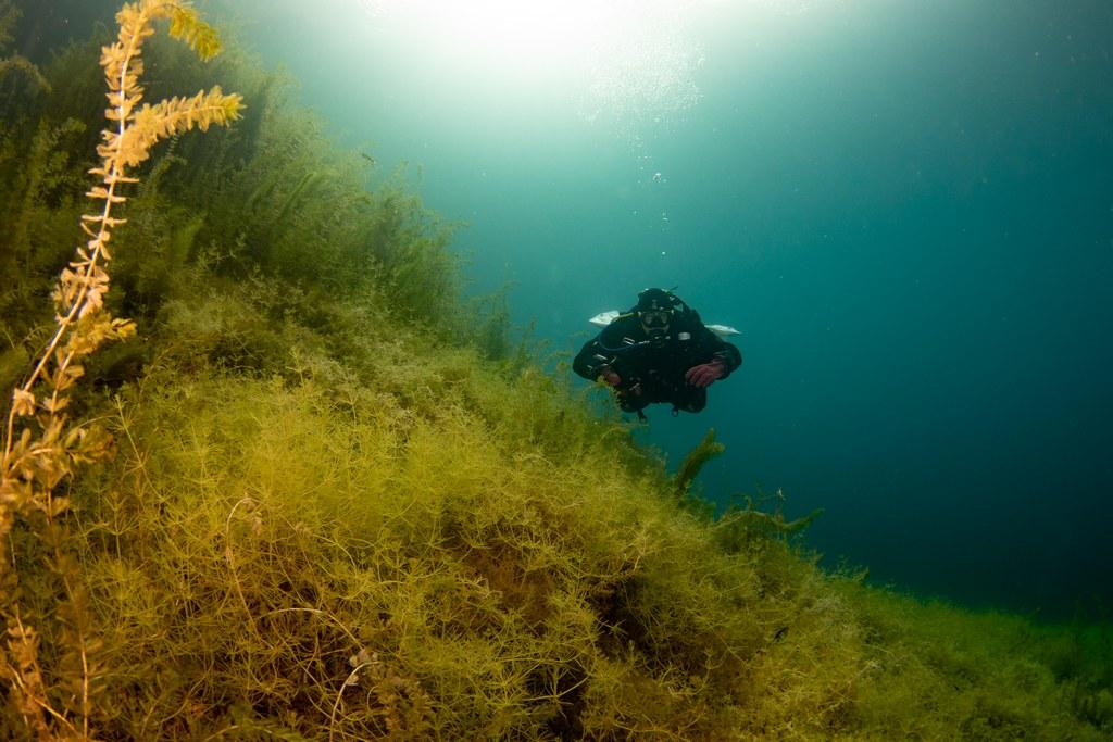 Jeux de lumières sous l'eau à la Gravière du Fort
