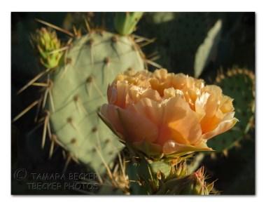 20140413-DSCN4768-framed