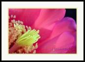 20140507-_DSC1999-framed